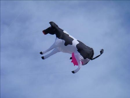 Flying Cow Kite Line Laundry Jims Kites