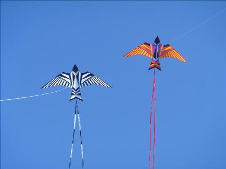 Sky Bird Kite Jim S Kites